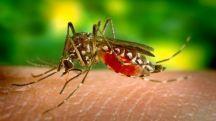 24 04 2018 11 59   Во четврток земјено запрашување против комарци